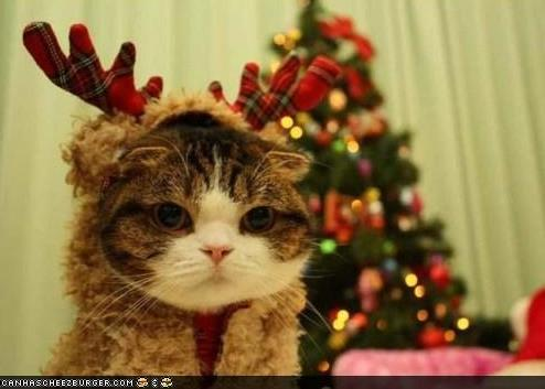 http://frou-frou.co.uk/wp-content/uploads/2010/12/Christmas-kitten.jpg