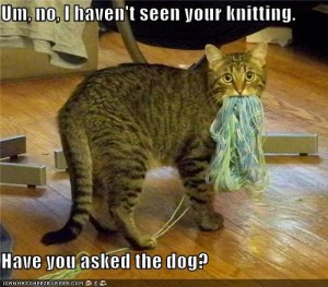 Kitty yarn